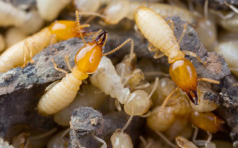 บริษัทกำจัดปลวกกำจัดแมลง Mr กิตติ พิชิตเเมลง